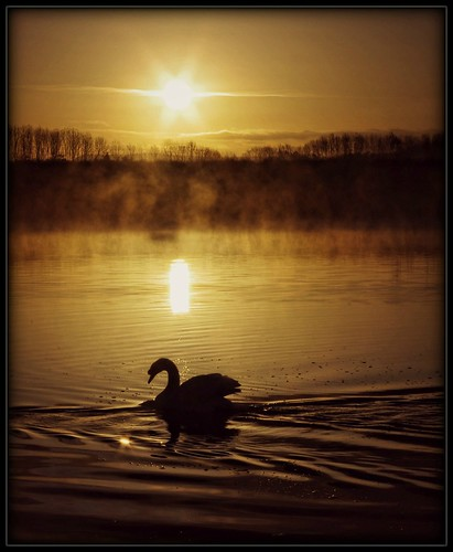 uk morning light sun mist nature water birds silhouette fog sunrise dawn spring swan loveit preston daybreak brockholes