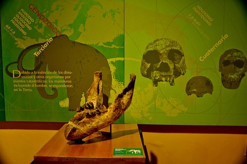 Museo de Paleontología (09)