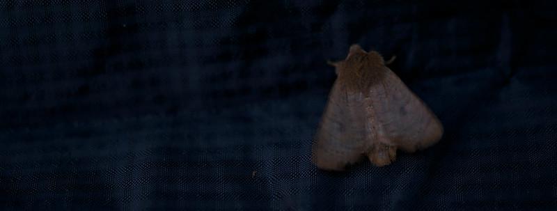 Moth on eVent