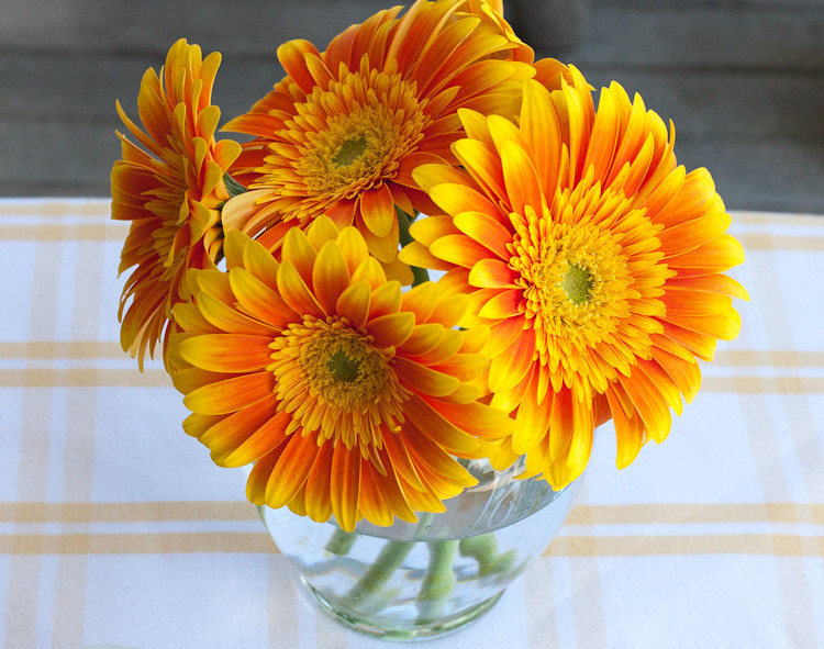 Stunning daisies, just because.  Happy Easter!