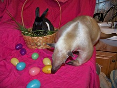 Pua Easter photos