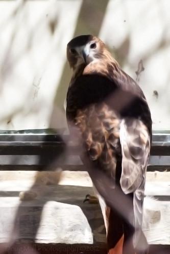nature animal nc sanford sanleepark nikond5000 dougmall