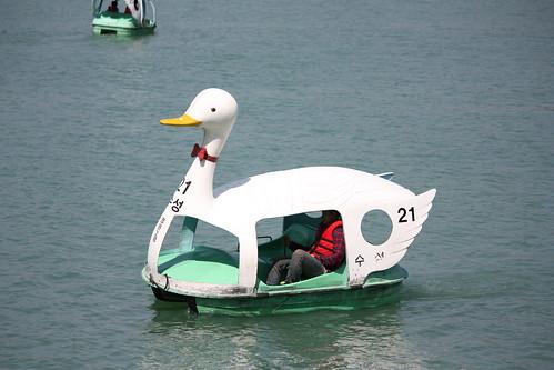 Duck Boats on Suseong Lake in Daegu, South Korea