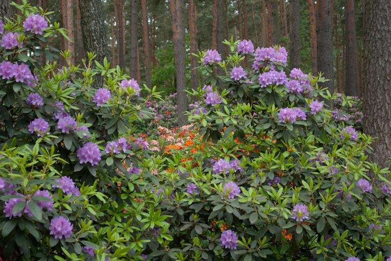 прекрасные цветы DSC_5473