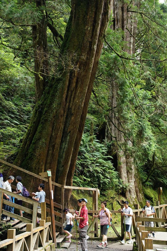 巨木群,與往拉拉山的路上-087