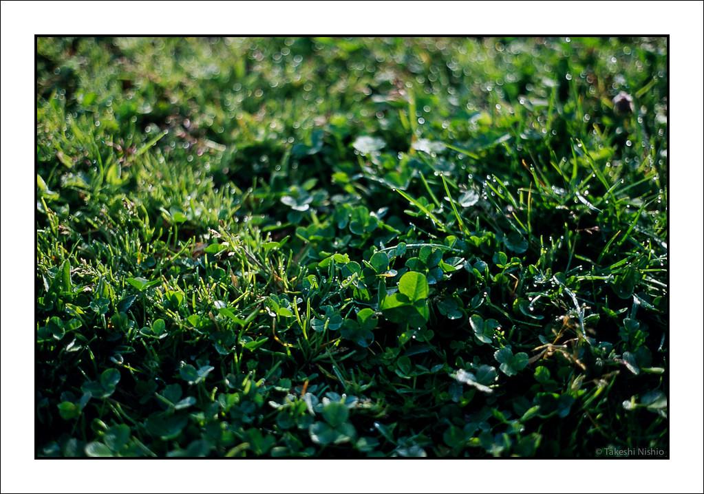 2012-04-15_361_Scan001_00608.jpg