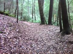 Nicer Trail
