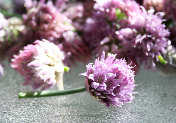 Making chive blossom vinegar is incredibly easy to make and it's ...