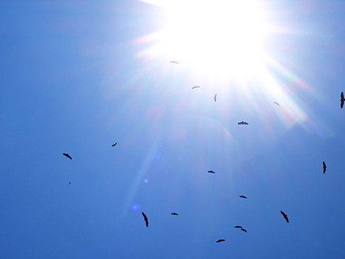 vultures circling in the sky