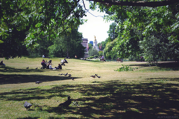 aliciasivert, alicia sivertsson, london, england, St James' Park, natur, duvor, nature