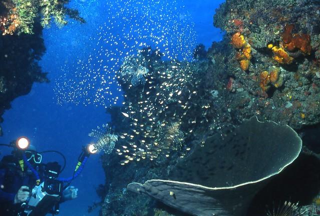 讓海洋繽紛依舊,人類必須更節制使用海洋資源。(圖片來源:「許海洋一個未來」特展)