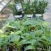 TRG_Plant08