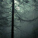 Forest life by Olga Kruglova
