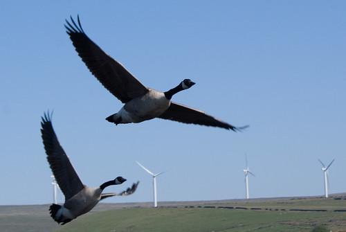 研究發現,海鳥會主動避開離岸風力發電廠。(來源:Gidzy)