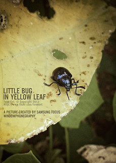 Little bug in yellow leaf