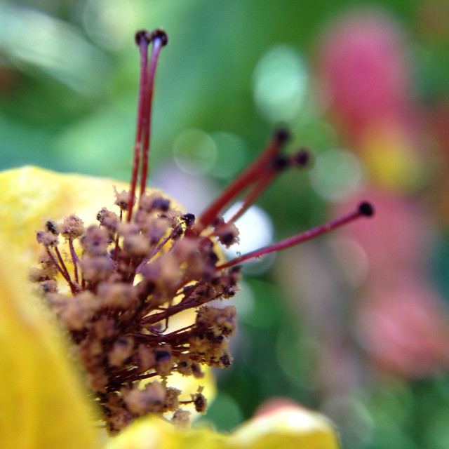 Balboa Park Botanical Macro-8