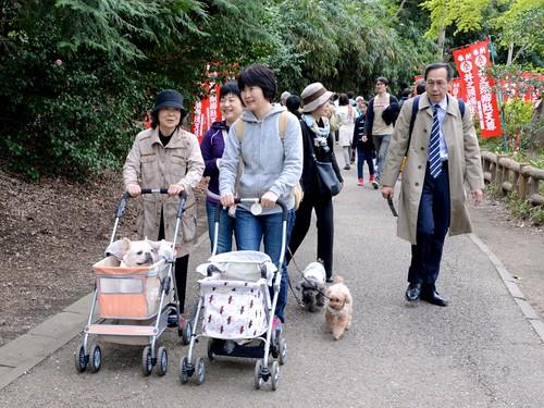 Cachorros em carrinhos de bebê no Japão