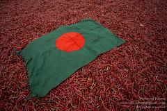 Chillies of Bangladesh
