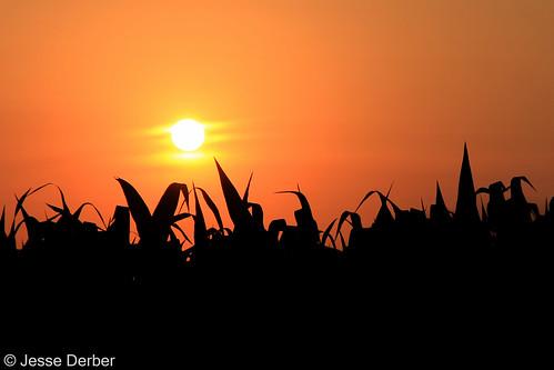 lebanon illinois corn cornfield