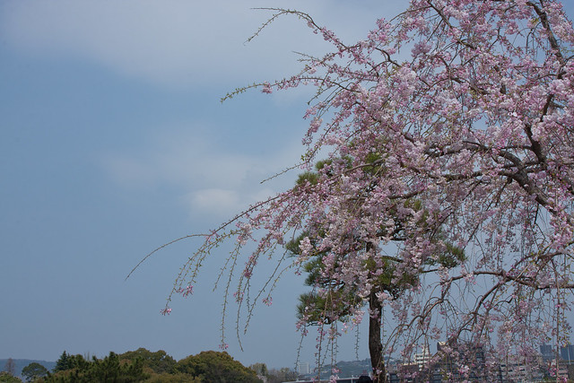 2012-kyushu-501