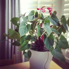 flower arranging, flower, leaf, floral design, plant, flora, green, floristry, fuchsia, pink, petal,