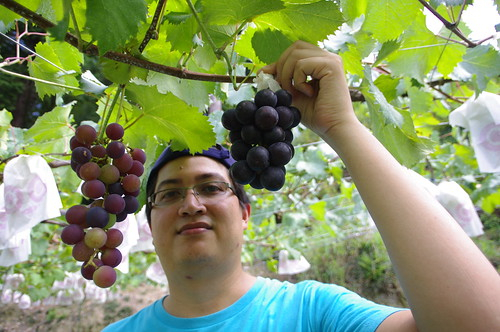 Grape picking at Okazaki
