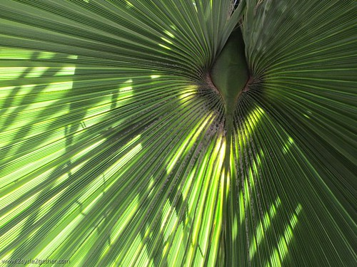 Detail of Palm, Guerrero Negro