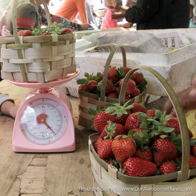 Strawberry Picking In Benguet: Strawberry Fields Forever