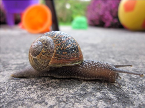 Spring snail by PhotoPuddle
