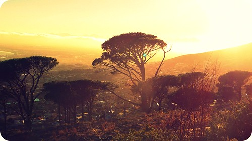 africa city morning trees sun sunlight nature sunshine forest sunrise capetown