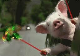 whee pig 1