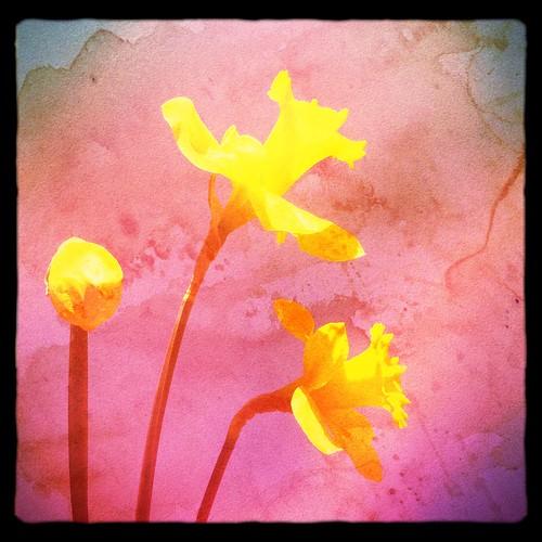 Spring's Canvas