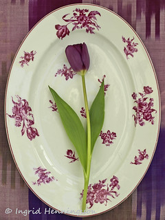 Purple Tulip on Vintage Floral Platter