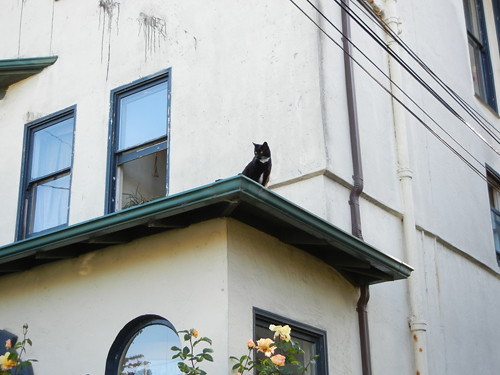Cat on Rooftop _ 8678