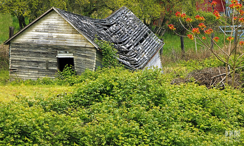ian sane images pulling down the house mother nature blackberry blackberries green old decay broken building field brooks gervais oregon landscape photography