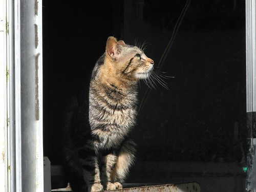 Tabby Cat in Frame