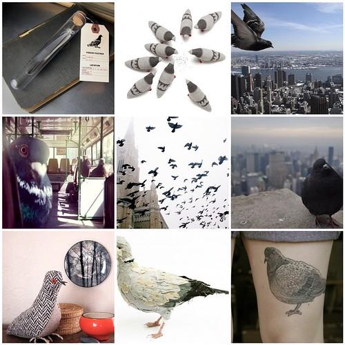 pigeon inspiration