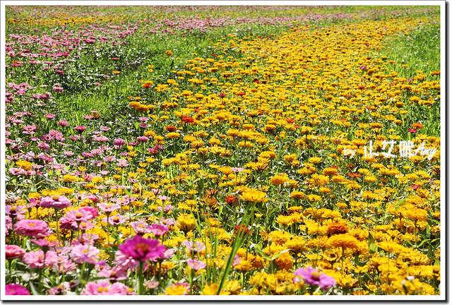 滿州花海IMG_1446