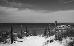 Le chemin de la plage ...