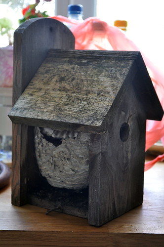 wasp nest in bird box