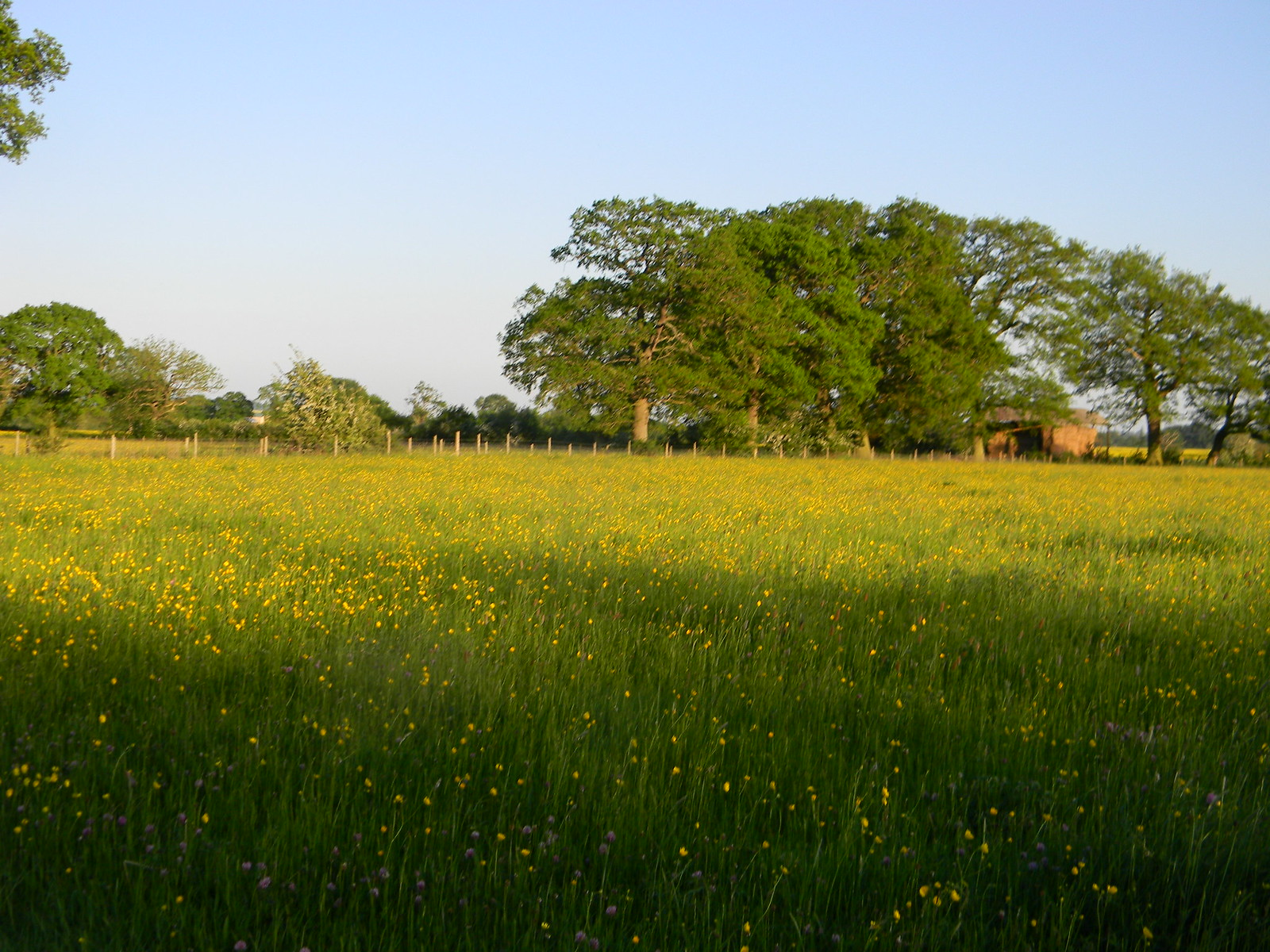 Buttercups Moreton-in-Marsh Circular
