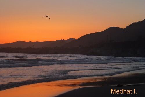 sunset birds palm medhathi mygearandme mygearandmepremium mygearandmebronze mygearandmesilver mygearandmegold mygearandmeplatinum mygearandmediamond coastalandwaterviewsbymi pacificmocean