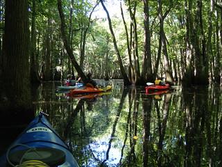Sparkleberry Swamp Jun 2, 2012 11-09 AM