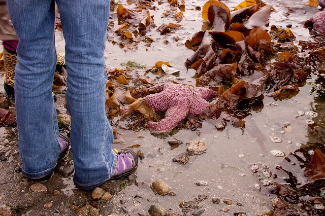 Pink sea star