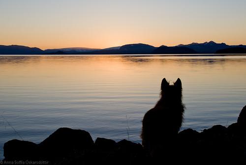 Sunrise at Lake Þingvallavatn iii