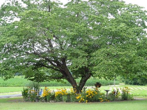 Mom's Yard June 2012 (19)