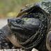 Turtle by bobisi3