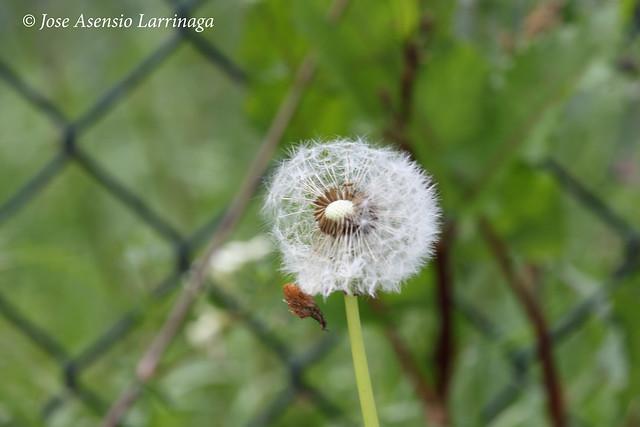 Abuelo #DePaseoConLarri #Flickr 7264