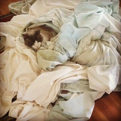 Some days you just want to stay in #bed no matter what! *This pile of sheets includes the duvet cover that was delicately removed without disturbing the #cat. #spoiled #catstagram #picoftheday
