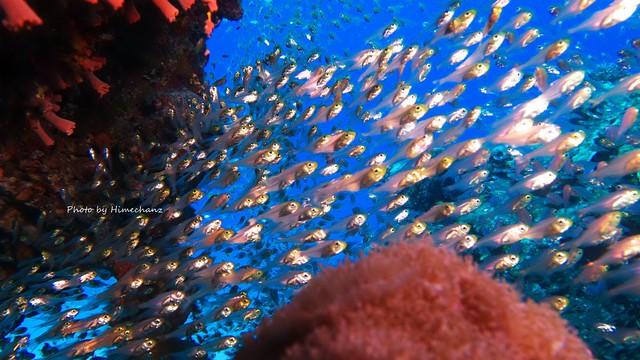 小魚いっぱいのこのポイントは特に大人気でした♪